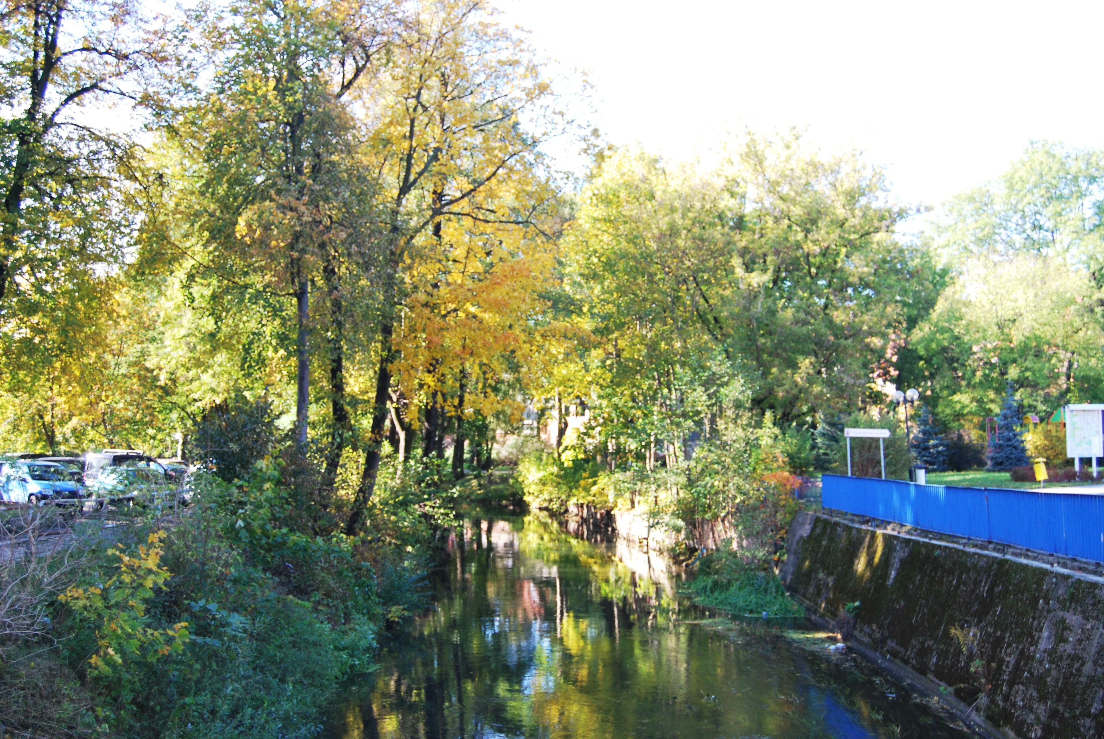 Rzeka Lyna w Olsztynie