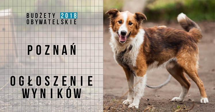 Poznań_2018_wyniki