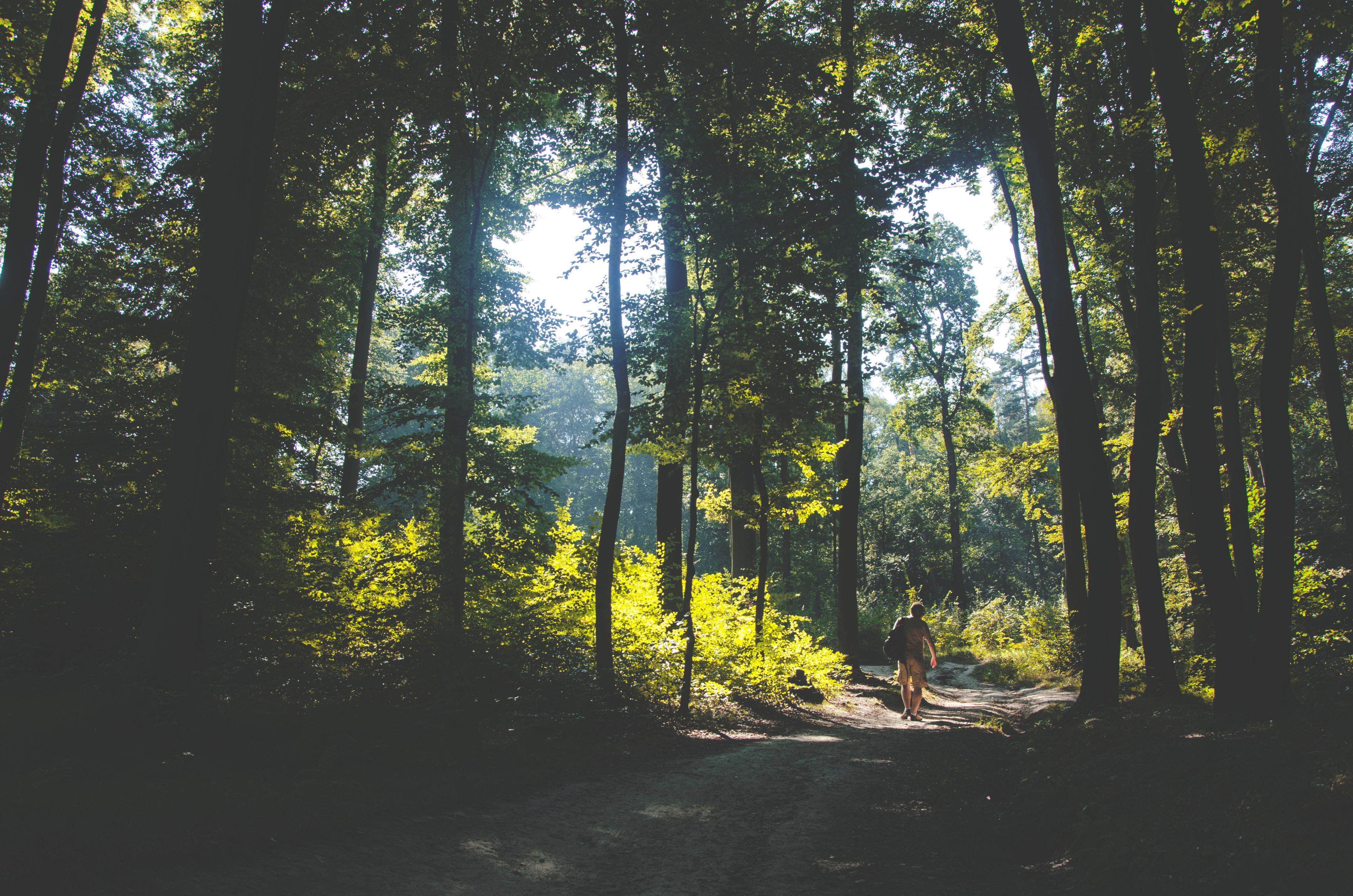 Las w Dzielnicy Krakowa VII Zwierzyniec