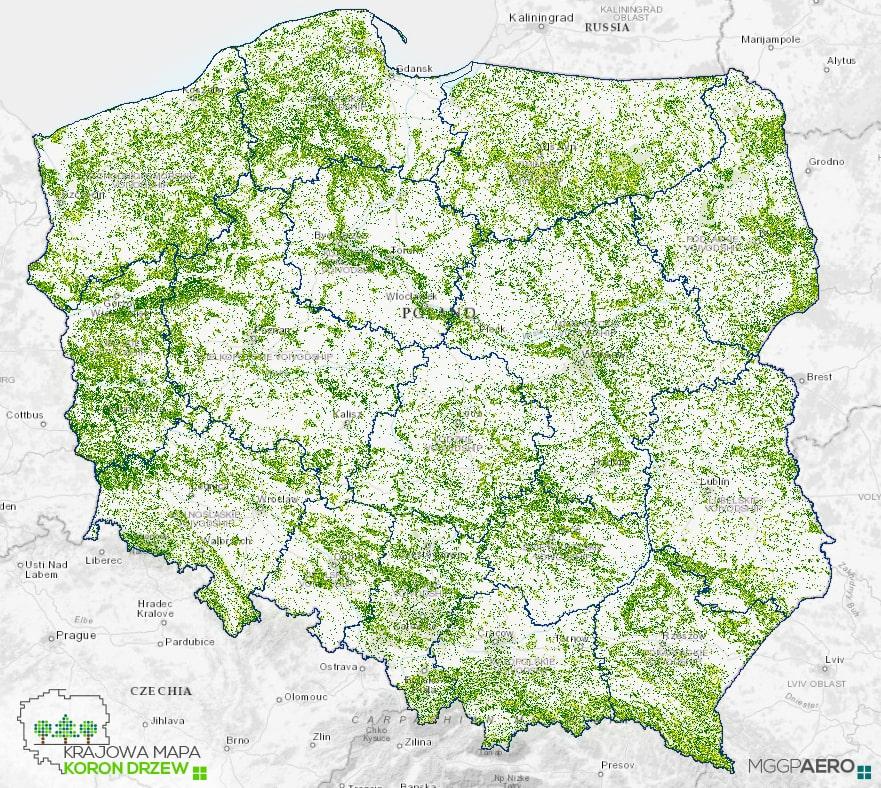 Krajowa Mapa Koron Drzew dla skali całego kraju
