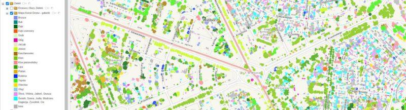 Fragment warszawskiej mapy korony drzew