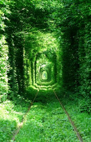 źródło: http://upload.wikimedia.org/wikipedia/commons/6/64/Green_Mile_Tunnel%2C_Rivne.jpg