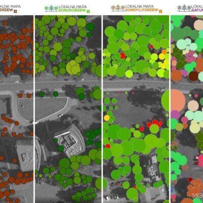 Produkty Lokalnej Mapy Drzew
